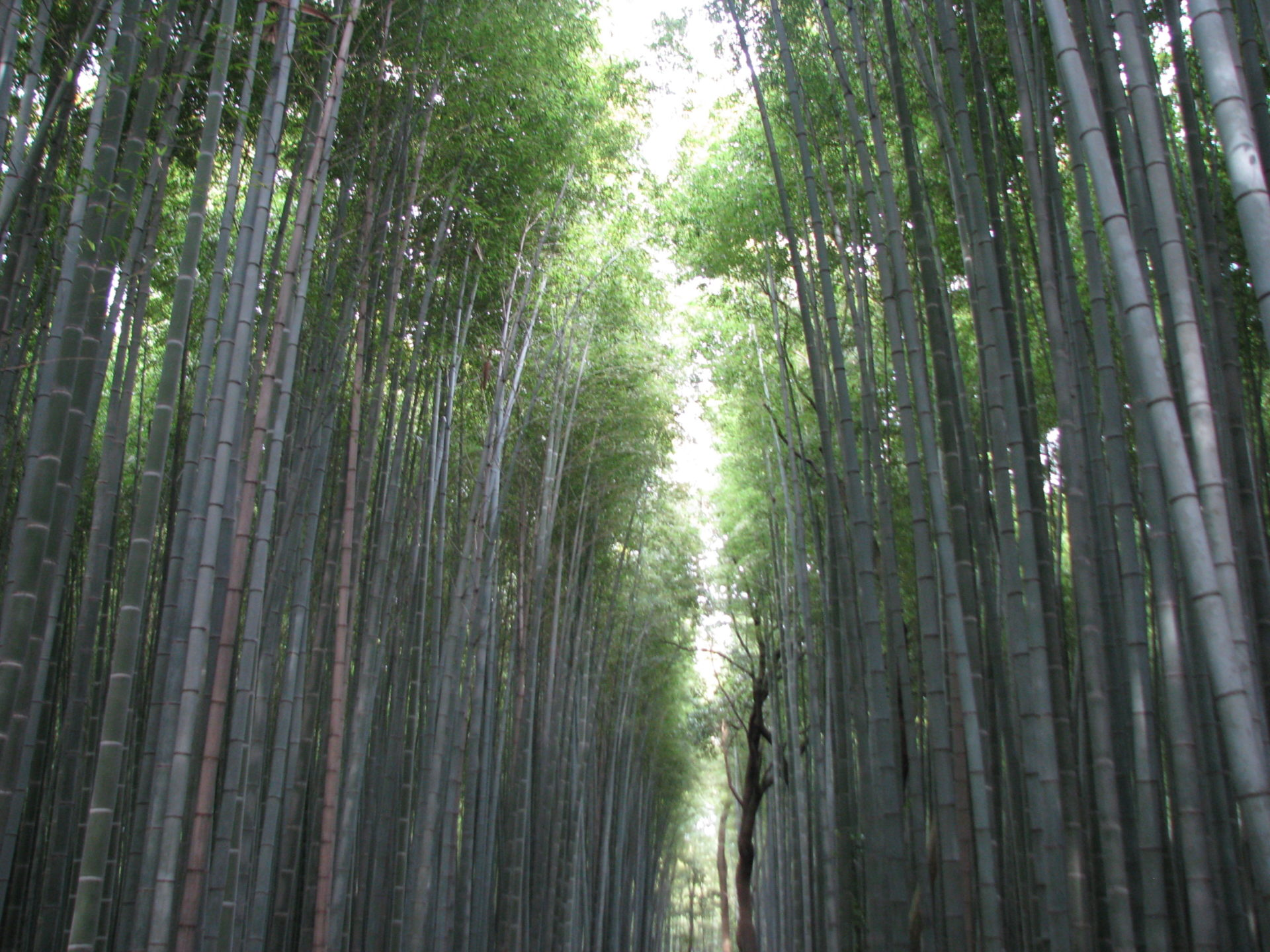 Giappone - Cosa vedere - Itinerari