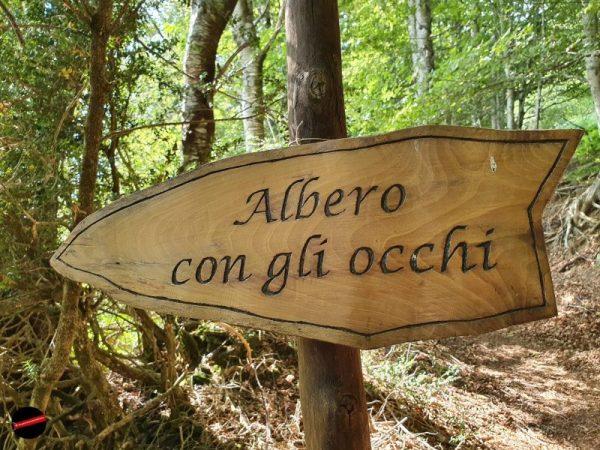 Orsigna - L'Albero con gli Occhi